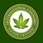 international cannabis association