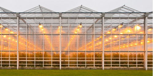 cs polycarbonate greenhouse